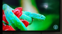 Sanyo Kaizen Series TV Hands On Review